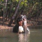 Elephant Sanctuary at Neyyar Dam Kerala - India