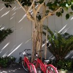 (Free) bikes for getting around -