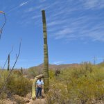 An almost armless Saguaro.