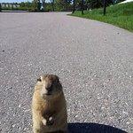 Esquilinhos da pradaria, muito fofos e mansos.