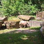 Nashorn im Zoo Nürnberg