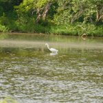 Cowley State Fishing Lake