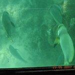 Mini submarine view