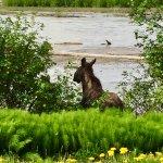 Rainbow Glacier moose sighting