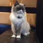Matilda - the hotel cat
