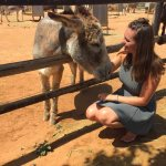 All the donkeys who walked up to the fence for cuddles 💖