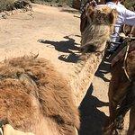 Foto de Camel Park