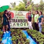 Visitors at Libtong Strawberry Garden