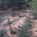 Photo of Kapama Southern Camp