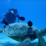 Hanging out with sea turtles