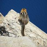 Cute wildlife at Crater Lake National Park