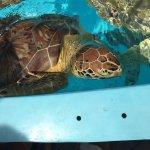 Foto de The Turtle Hospital