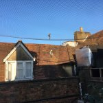 The morning dawns. Dead pigeon in netting and plug that is too small for the basin! Telephone so