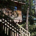 Une maison dans les arbres, surement une expérience amusante!