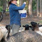 Farmer Andrew guiding us through the feeding.