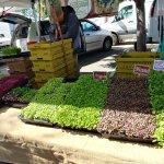 Herbs to takeaway