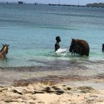 Locals come near to give horses a swim in the sea
