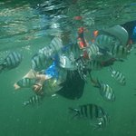 snorkeling, tons of fish!