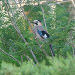 Jay from our balcony