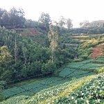 The terraced farmland