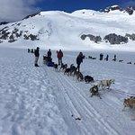 Our dog sledding team