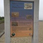 About the Piping Plovers