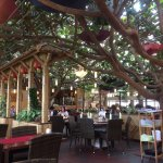 Bambus-Garten Foto