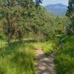 Spring hiking trails on Case Mountain Recreation Area adjacent to Cort Cottage