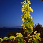 A refreshing vine