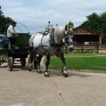 Horse drawn rides into the valley