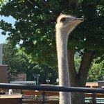 Photo of Maruyama Zoo