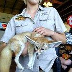 A rescued fennic fox