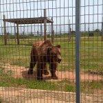 Big adorable bear!