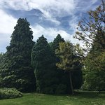Photo of Bute Park