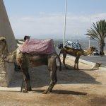 Photo of Agadir Kasbah