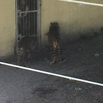 Photo de Dudley Zoo and Castle