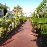 Foto di Delfinia Resort Hotel