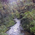 Photo of Ruakuri Walk