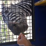 Safari Ravenna Foto