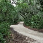 Beautiful canopy of live oaks cover the sandy road within the park