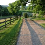 Morning light, walking toward the barn