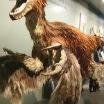 Photo de Muséum d'histoire naturelle de Vienne