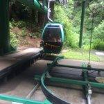 The pet-friendly tram!