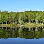 Mirror imaging on pond