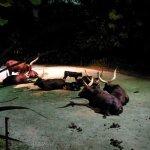 Photo of Night Safari