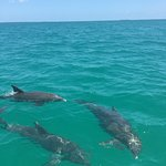 Photo of Wild About Dolphins