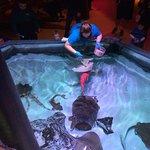 Staff feeding rays and sharks...
