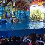 Sea World San Antonio Tx