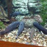 View of One Aquarium