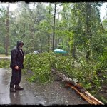 It was raining and a tree fell right by our campsite.